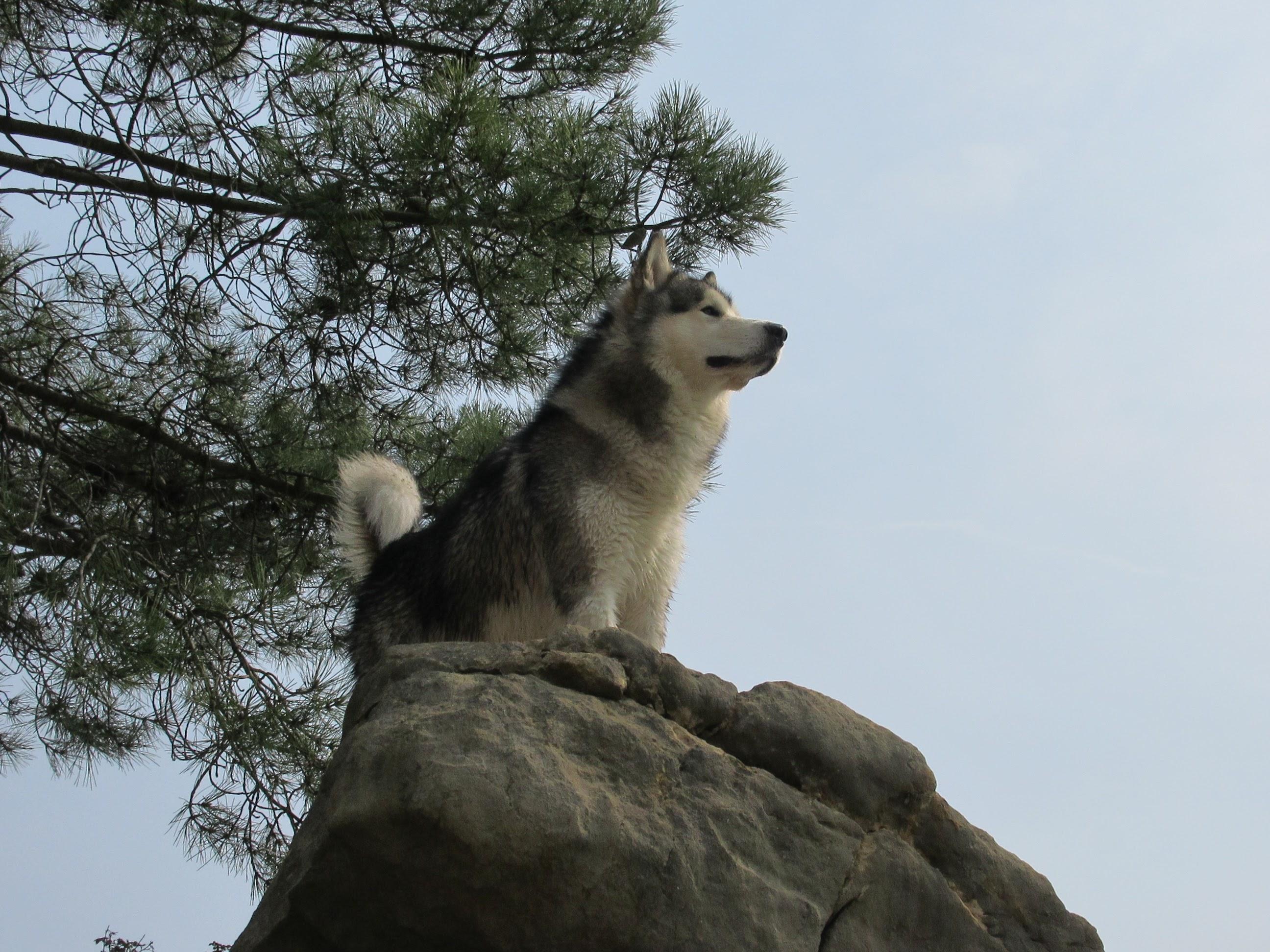 Mirando el horizonte