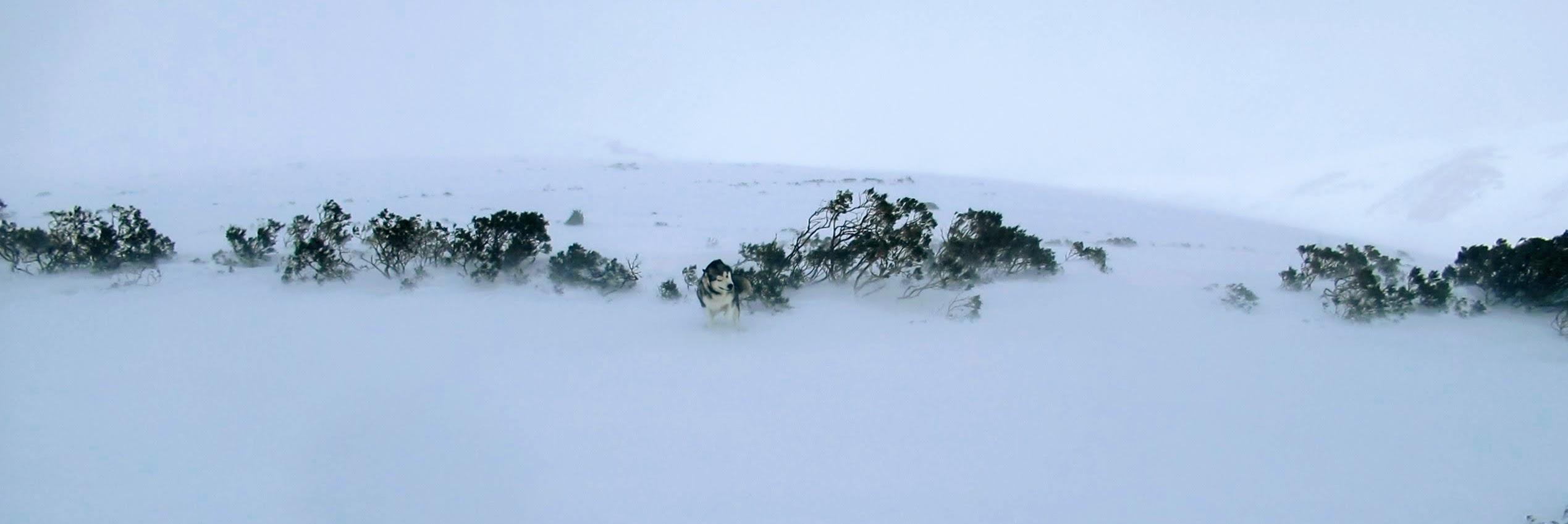Sierra del Cordel, Brañavieja. Ventisca y bajo cero.