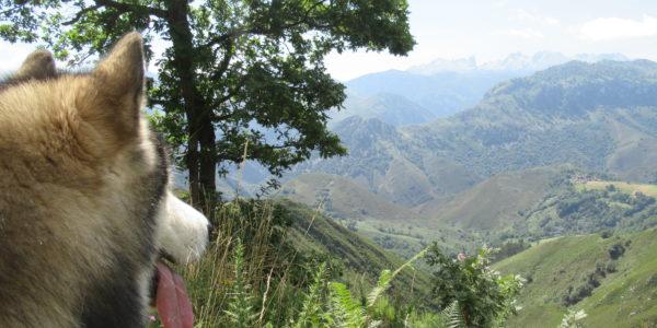 Peñamellera Alta, de Alles a las Brañas por la Riega Vellanco.