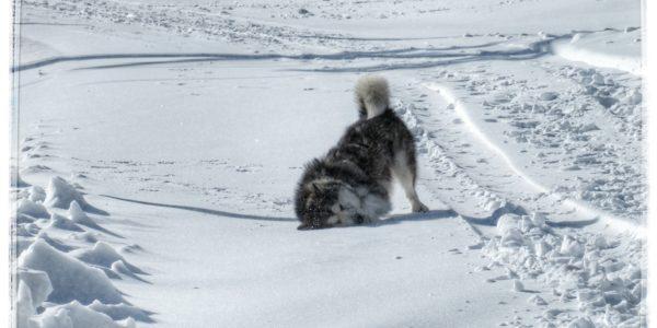 El Chivo, pisando las primeras nieves de la temporada.