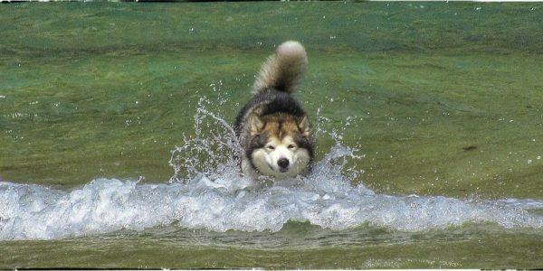 Rompiendo el agua